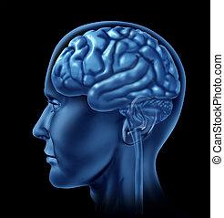 hersenen, symbool, neurologie