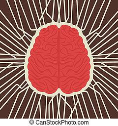 hersenen, verbinding, complex