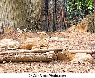 hertje, groep, zoo.