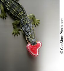 herz, aligator, kiefer, zuckerl, valentine, seine, cocodrile, spielzeug, rotes