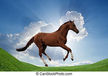 hest, på, grønnes felt