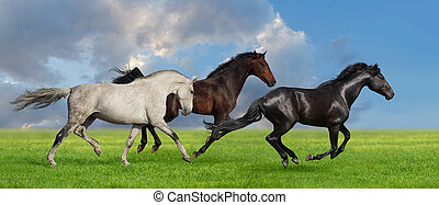 Heste, Græsgang, løb