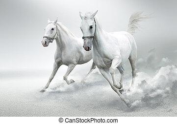 heste, hvid