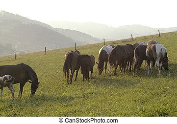 heste, ind, tåge