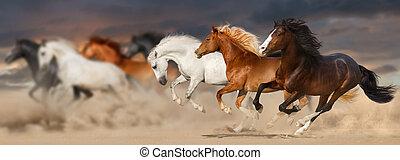 heste, løb, fri