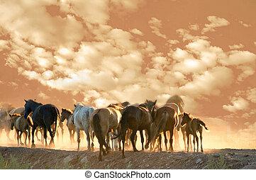 heste, løb, hos, sommer, aftenen