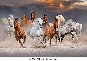 heste, løb, ind, ørken