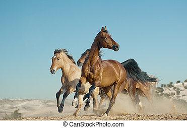 heste, løb, ind, en, vild