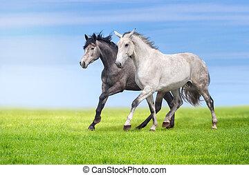 heste, løb, ind, græsgang, hos, sommer, da.