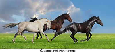 heste, løb, ind, græsgang
