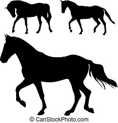 heste, silhuetter