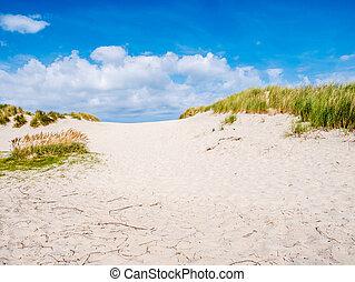 het, friesland, pays-bas, nature, île, réserve, marram,...