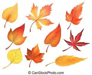 het gebladerte van de herfst, van, herfst, vallende verlofen, vector, iconen