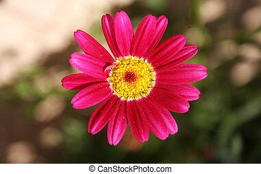 het glimlachen, bloem