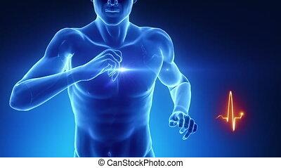 het hart sloeg, concept, in, fitness