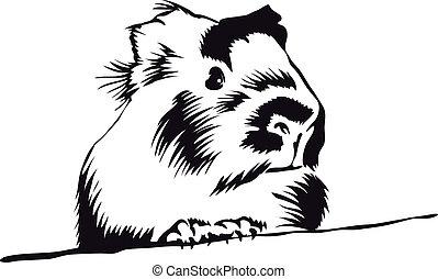 het kijken, guinea, ongeveer, varken