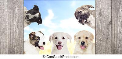 het kijken, hondjes, groep