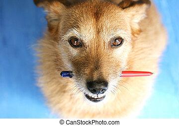 het kijken, pen, dog, op