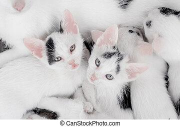 het kijken, schattig, weinig; niet zo(veel), came, katjes