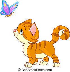 het kijken, vlinder, katje