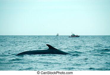 het letten op van de walvis
