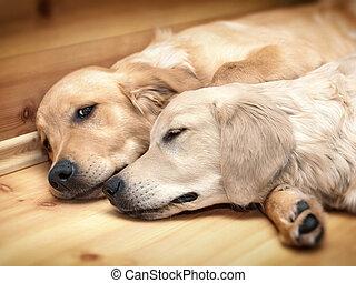 het liggen, twee, honden, aanzicht