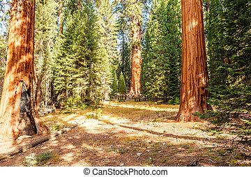 het nationale park van de sequoia, op, herfst