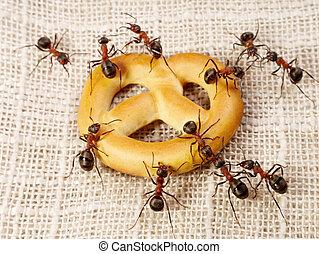 het oplossen, mieren, teamwork, taart, probleem, vervoer