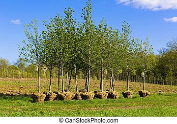 het planten van bomen