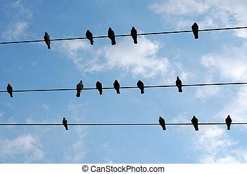 het rusten, vogels