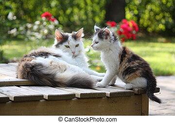 het rusten, zijn, schattige, moeder, katje