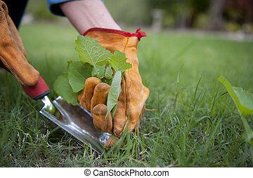 het slaken, onkruid, in, tuin