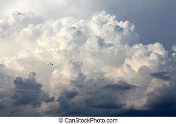 het stijgen, wolken, vogel