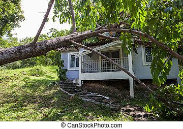het vallen, boompje, na, hard, storm, op, beschadigen,...