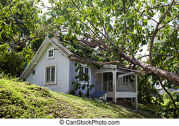 het vallen, boompje, na, hard, storm, op, beschadigen, woning