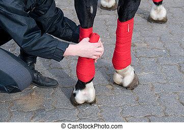 het verbinden, horses', legs.