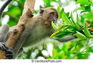 het verzamelen zich van het voedsel, aap