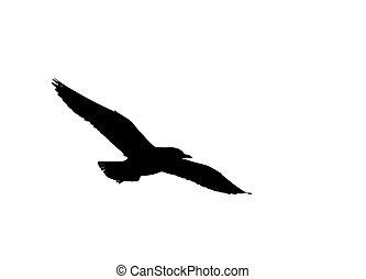 het vliegen van de zeemeeuw, silhouette