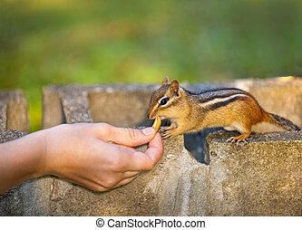het voeden, fauna