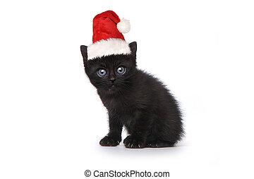 het voeren zwart, kerstman, katje, witte hoed