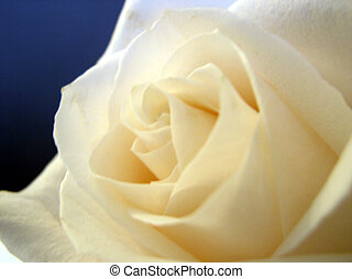 het wit nam toe, bloem