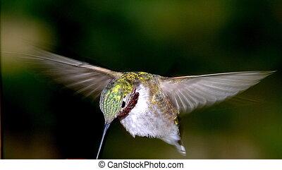 het zoemen, vogel