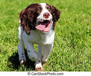 heureux, chien