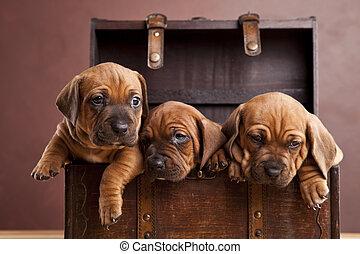 heureux, chiens, trois