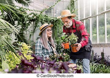 heureux, gai, bois, personnes agées, pots, serre, couple, beau, fonctionnement, quoique, décoratif, barbu, mettre, séance, sien, homme souriant, jardiniers, ensemble, boîte, épouse, fleurs
