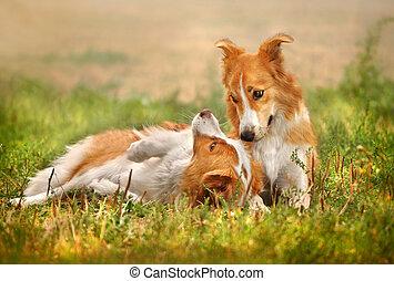 heureux, herbe, pose, chien, deux