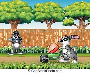 heureux, lapins, paques, nature