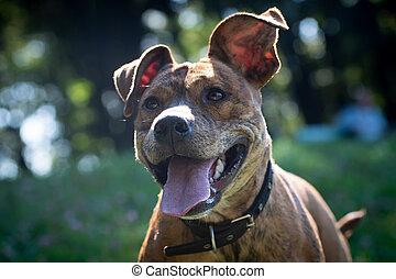heureux, portrait, sourire, extérieur, rouges, closeup, collier, chien