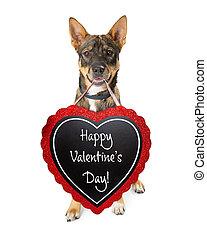 heureux, valentines, chien, jour, signe
