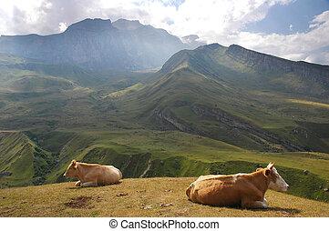 heuvel, koien, zomer, bovenzijde, twee